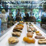 Baltic Amber - Tradition & Innovation